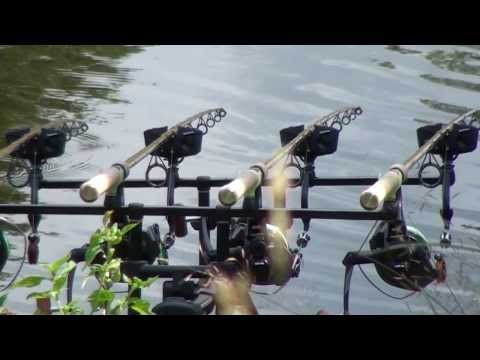 тимирязевские пруды платная рыбалка цены