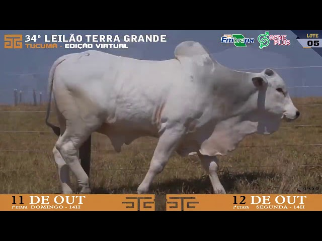LOTE 005