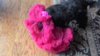 Max And The Pink Tutu 2