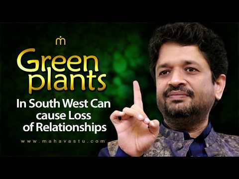 Green Plants In South West Can Cause Loss of Relationships। Dr. Khushdeep Bansal ।