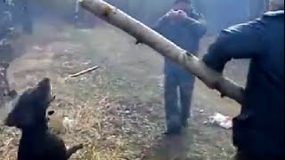 Dog Fetches Biggest Stick Ever / Собака и бревно