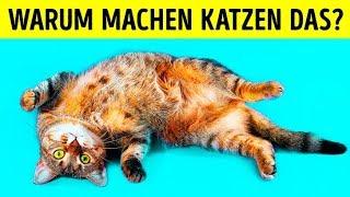 Warum Katzen sich auf ihren Rücken legen, wenn sie dich sehen