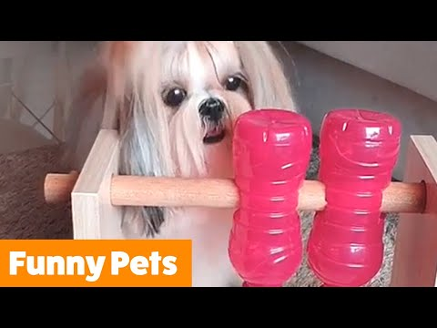 Funniest Cute Pets | Funny Pet Videos