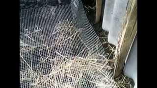 Переработка отходов в теплице, Делаем червятник.(Делаем червятник в теплице, для переработки органики и получения биогумуса и живой массы червяка. Горящие..., 2014-04-06T07:18:36.000Z)