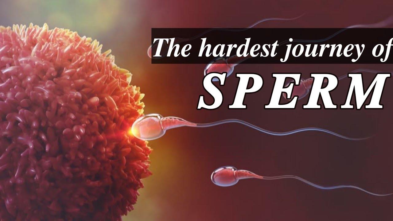 fertilization for Sperm journey
