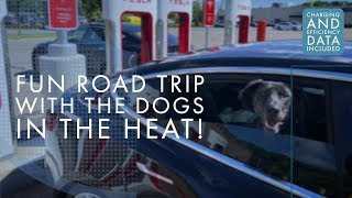 Model 3 | 1,200 Mile Road Trip with 2 Dogs