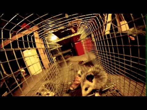 Trapping Opossums - Action Camera