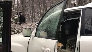 Baby bear found honking horn in Tennessee car