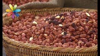 Как выбрать сырой, жареный и соленый арахис? – Все буде добре. Выпуск 1037 от 19.06.17