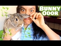 How To Get Rid Of Bunny Odor