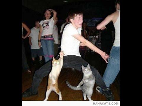 Recopilación Gatos Bailando. Vídeos de Gatos Chistos