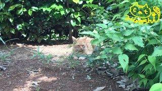 前回の野良猫ではありません( ̄∀ ̄) 庭にて。 犬と猫の過ごし方。 ※ひろ...
