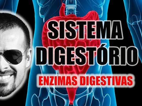 Sistema Digestório - Enzimas digestivas e processos químicos da digestão - Anatomia - VideoAula 026