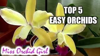 Top 5 orchids for beginners