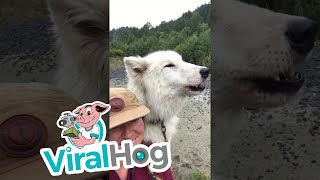 Dog Calls out for Friends on Command || ViralHog