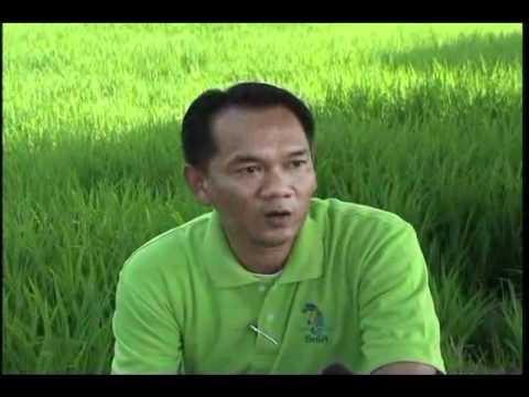 Kỹ Thuật Trồng Lúa Tại Thái Lan
