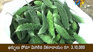 Intercropping of vegetables with modern technology proves profitable    Experience of Warangal young