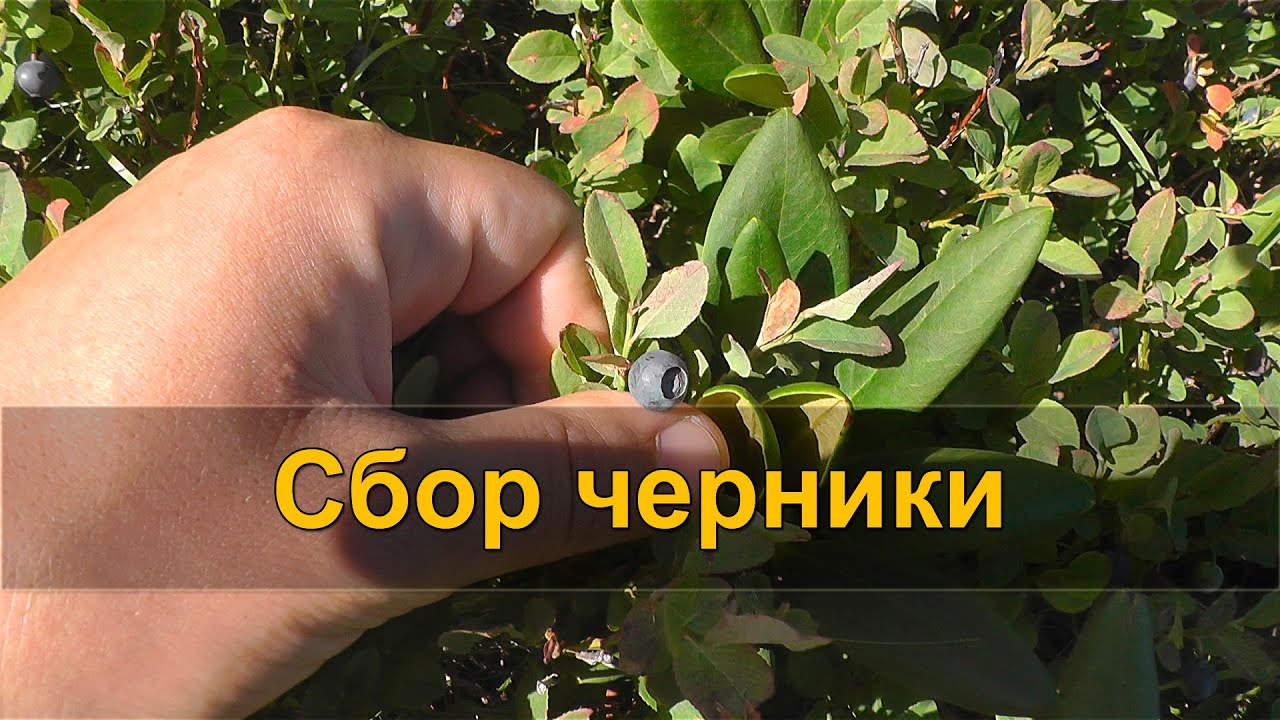 какие травы пить от паразитов в организме