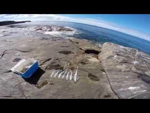 How To Catch Squid
