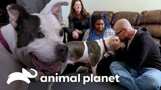Magoo, perrito adorable que busca un hogar | Pit bulls y convictos | Animal Planet
