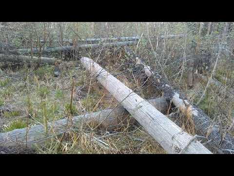 Закон о валежнике. Пилить лес можно?