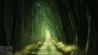 Dark forest radiOzora KRAFT Insomnia Records Series 11 15050218