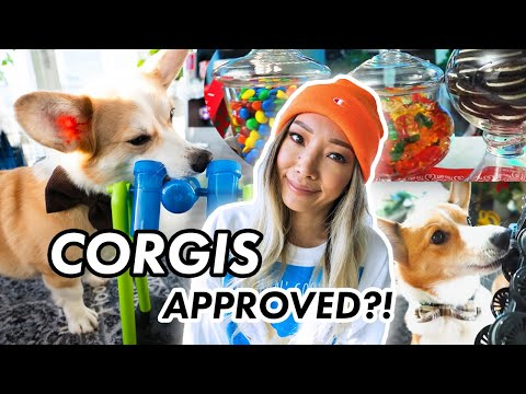 corgi-dogs-vs-hard-puzzle-toy- -make-your-own-candy-jars-for-apartment-decor