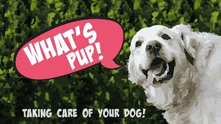 Taking Care Of Your Dog | What's Pup!