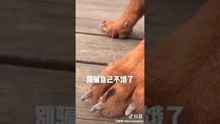 沙雕动物励志教育4 tiktok china funny  animals  4