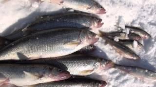 Зимняя рыбалка,Владивосток-Сахалин 2014.(, 2014-04-17T14:12:23.000Z)
