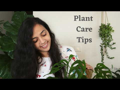 Best Plant Care Tips for Healthy & Growing Plants | Home Gardening | Gardening Tips