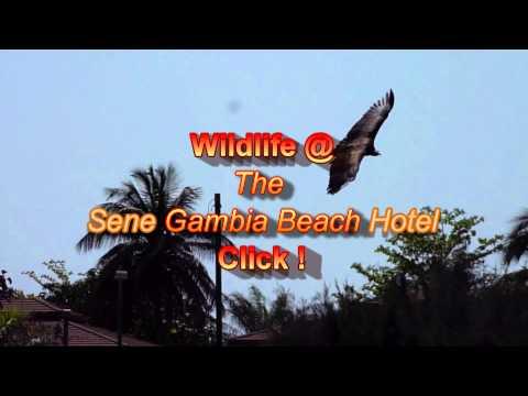Gambia wildlife at Senegambia hotel