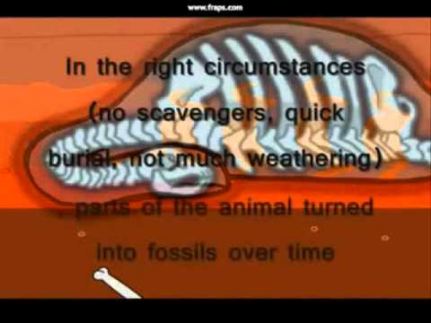 method of dating fossils by radioactive decay