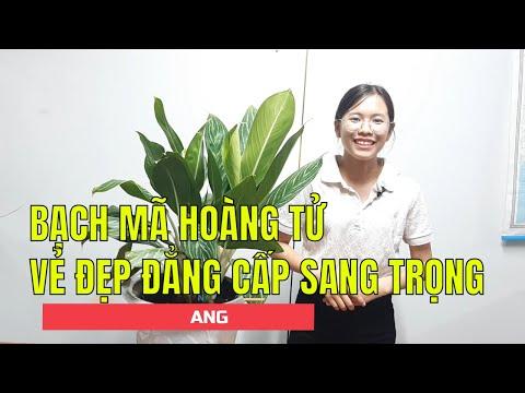 BẠCH MÃ HOÀNG TỬ  - VẺ ĐẸP ĐẲNG CẤP SANG TRỌNG |Giải Đáp Nhà Vườn|