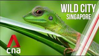 Singapore's Wild Islands | Wild City | Full Episode