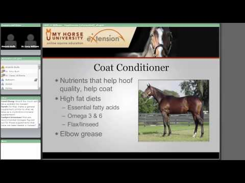 Nutritional Supplements for Horses