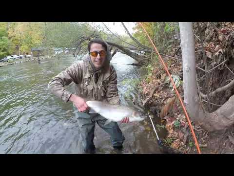 Oak Orchard Steelhead And Brown Trout