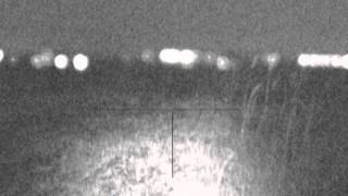 Ночная охота на шакала(Ночная охота на шакала., 2014-04-28T20:55:04.000Z)