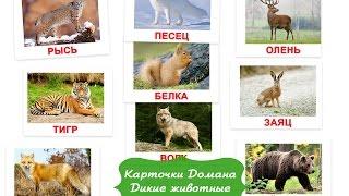 Карточки Домана - ДИКИЕ ЖИВОТНЫЕ РОССИИ картинки для малышей смотреть онлайн