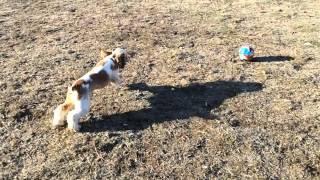 Sonya Play With Ball / Соня и мяч