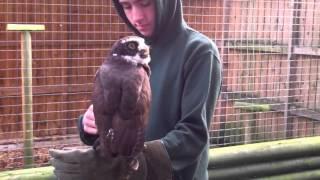 Will's Wild Animal Encounters at Hoo Farm - 1/11/2015 46
