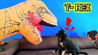 Mi Perro y su amigo el DINOSAURIO juegan y se divierten / Lana Funnydogs