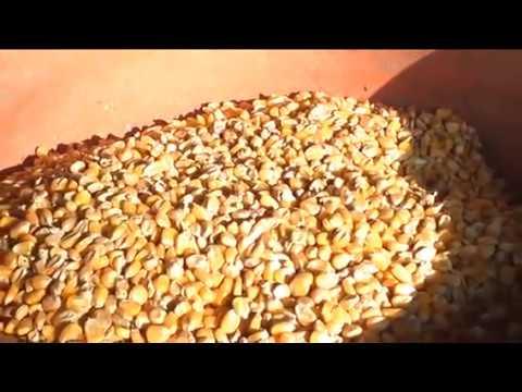 Cattle Feed Making Mchine by Shriram Industries