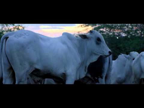 FICX 53 - Sección Oficial: Neon Bull Clips