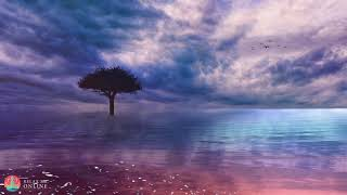 Meditation Relaxation Music, Calm Meditation Music, Deep Sleep Music, Relax Music for Better Sleep
