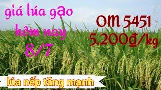 Giá lúa gạo hôm nay ngày 8 tháng 7 năm 2020 cập nhật mới nhất ở đồng bằng sông Cửu Long