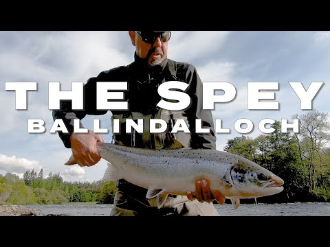 The Spey  - Ballindalloch Castle - Atlantic Salmon From The Junction Pool