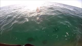 Jorgies welcome in Shark Week 8-11-2014