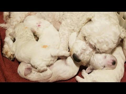 Annie & Puppies 19 Days Old