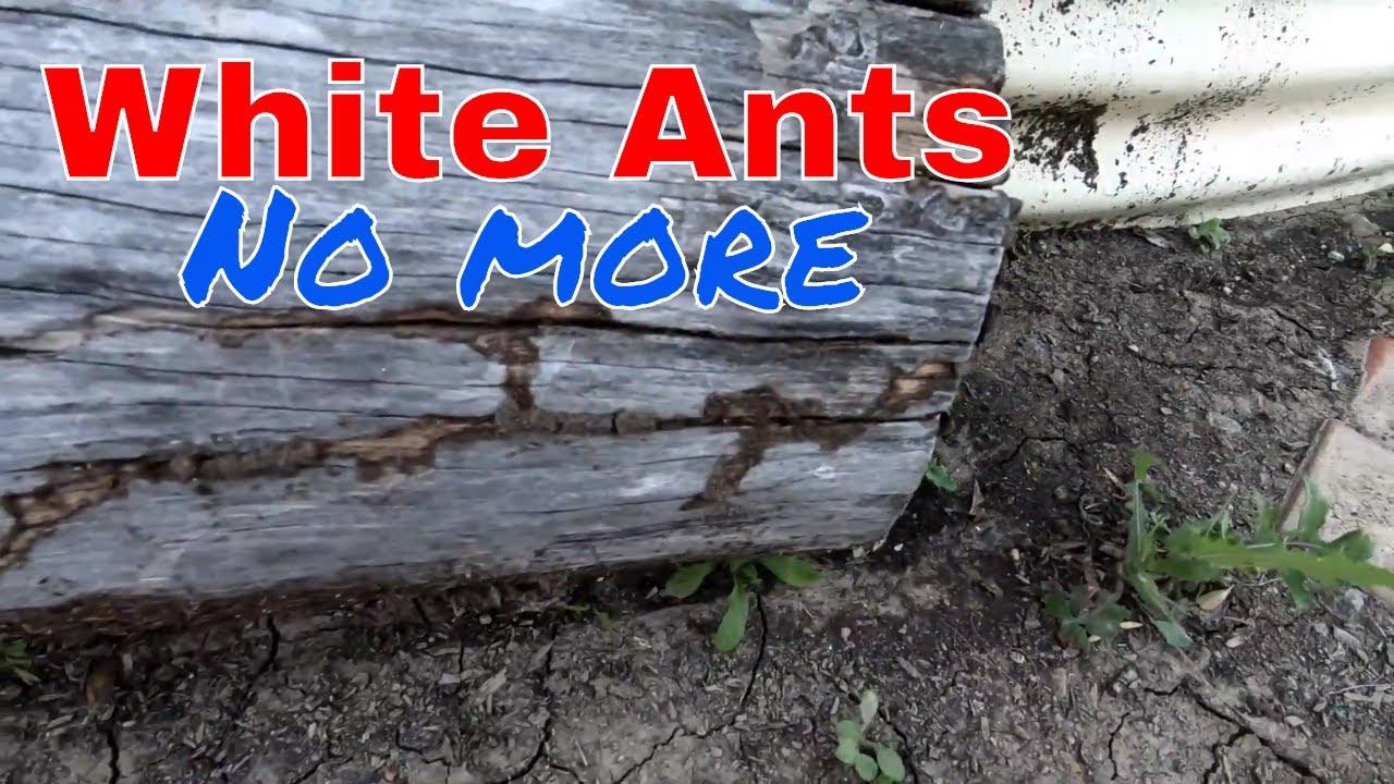 Diy White Ant Bait Station Youtube